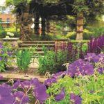 purple flowers growing outside the walls of the restored Victoran garden in Kennington Park