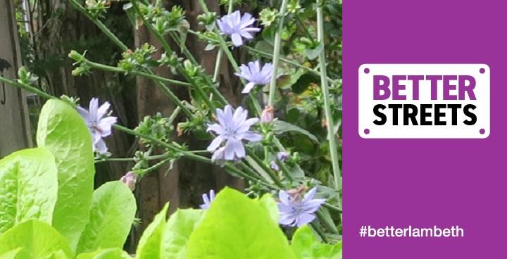 Blooming Lambeth Agnes Riley Community Garden