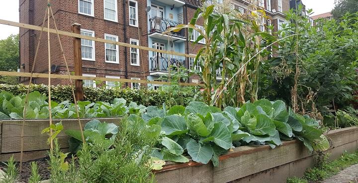 Showcasing Community Food Growing in Lambeth
