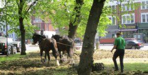 2 x Operation Centaur horses creating mini-meadow for pollinators on Clapham Common
