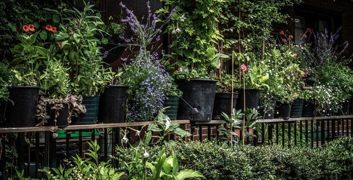 Blooming Lambeth 2020
