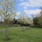 Trees in blossom at Green Flag-winning Slade Gardens