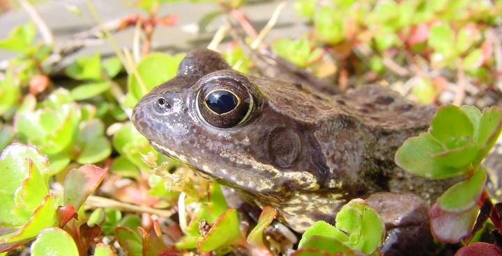 frog courtesy of Froglife