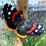 Big City Butterflies