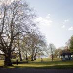 brockwell Park - sun between trees